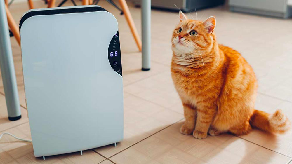 Why Do You Need The Air Purifier for Pets